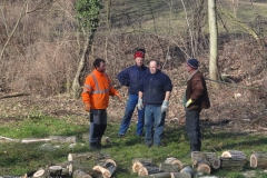 Baumfällarbeiten im Schlosspark